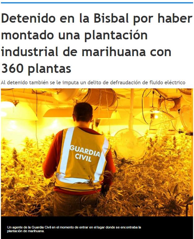 Detenido por plantación industrial de marihuana